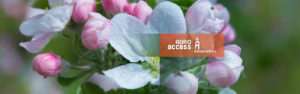 aclarida en flor AgroAccess