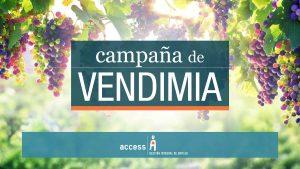vendimia recolección de uva 1