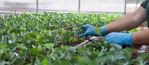 Viveros Access Agroindustria