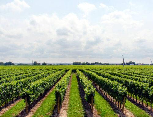 Medidas de seguridad en la agroindustria