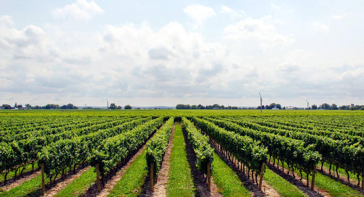 seguridad en la agroindustria