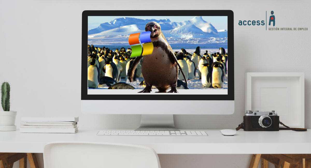de ventanas a pingüinos
